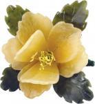 Blüten in gelb, ca. 10 cm